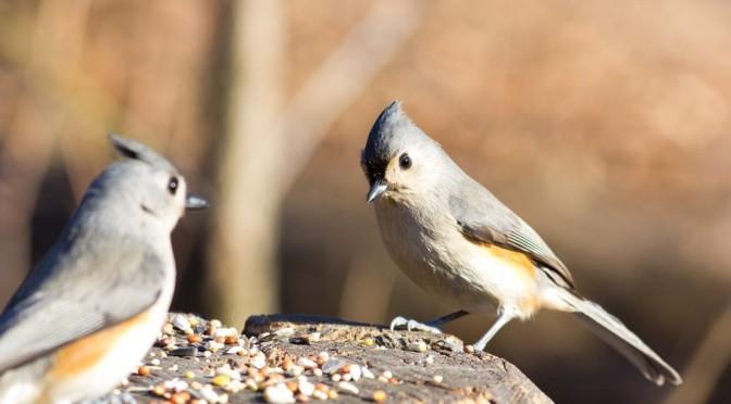 Semínka – zdravé zobání pro přibírání